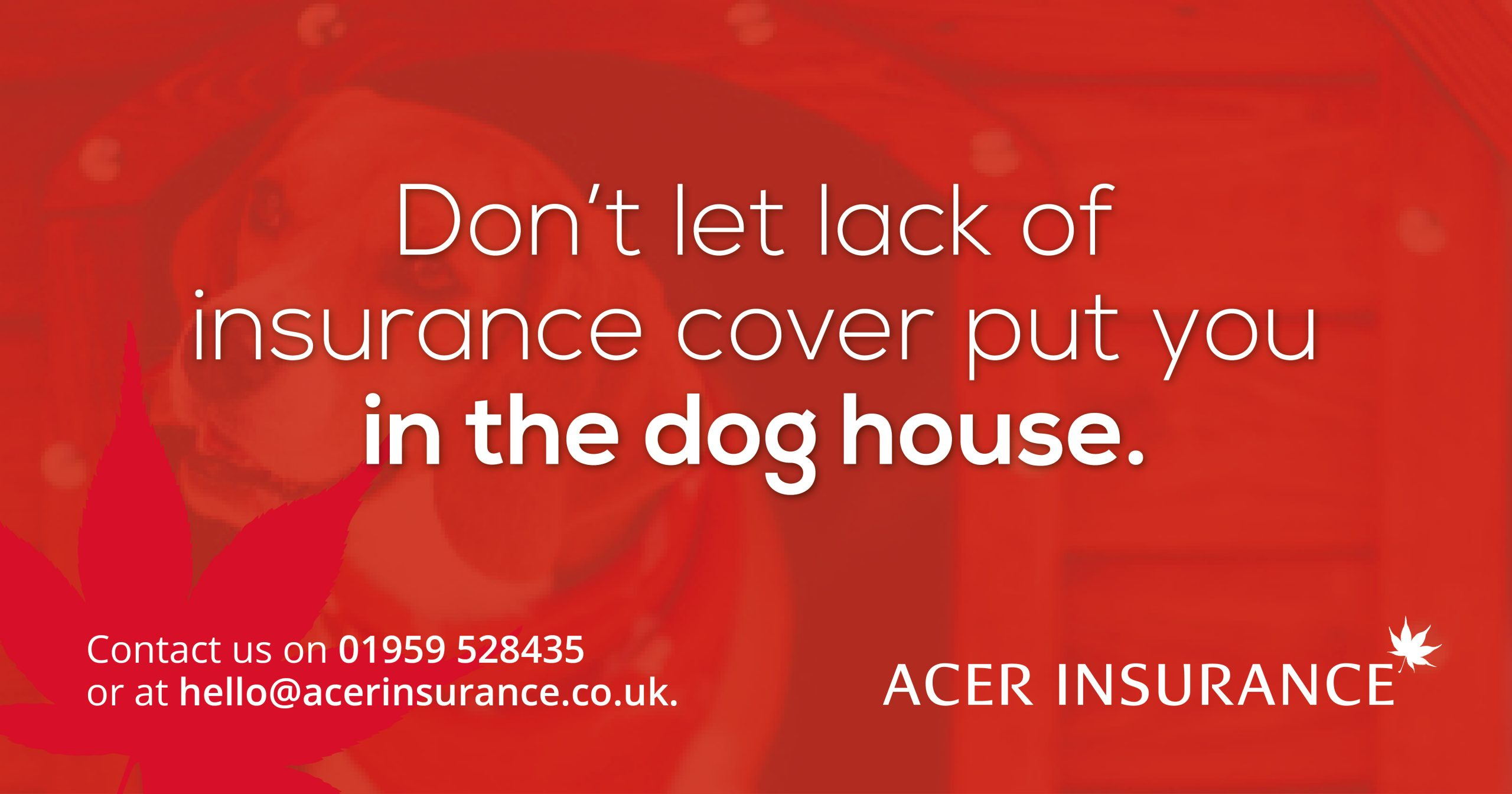 Don't let lack of flood insurance put you in the dog house